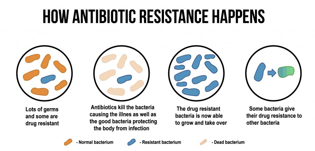 microbiota trastorno espectro autista (TEA)